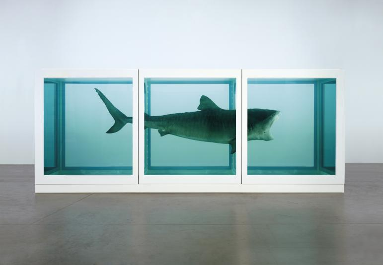 A shark suspended in formaldehyde. Damien Hirst, The Physical Impossibility of Death in the Mind of Someone Living, 1991. Glass, painted steel, silicone, monofilament, shark and formaldehyde solution, 2170 x 5420 x 1800 mm | 85.5 x 213.4 x 70.9 in.