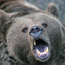 The world needs art to be beautiful. To do otherwise is like swatting an angry bear on the nose.